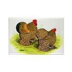 GL Cochin Bantams Rectangle Magnet (100 pack)