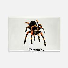 tarantula Rectangle Magnet
