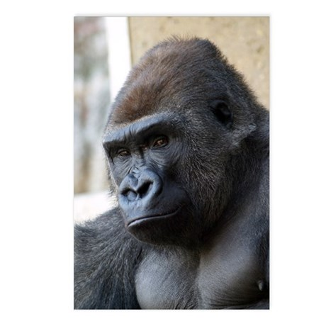Gorilla Watching Postcards (Package of 8)