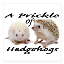 "Prickle of Hedgehogs Square Car Magnet 3"" x 3"""