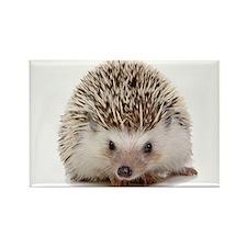 Rosie hedgehog Rectangle Magnet