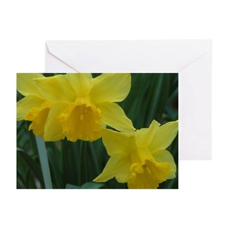 Daffodil Greeting Cards (Pk of 10)
