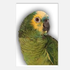 Amazon Blue Front Parrot Postcards (Package of 8)