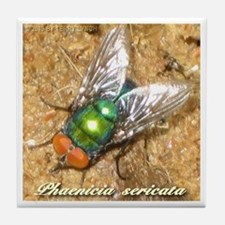 Phaenicia sericata Tile Coaster