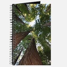 California Giant Redwoods Journal