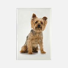 Yorkshire Terrier Rectangle Magnet