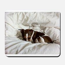 Sleepy Jack Russel Brindle Mousepad