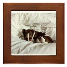 Sleepy Jack Russel Brindle Framed Tile