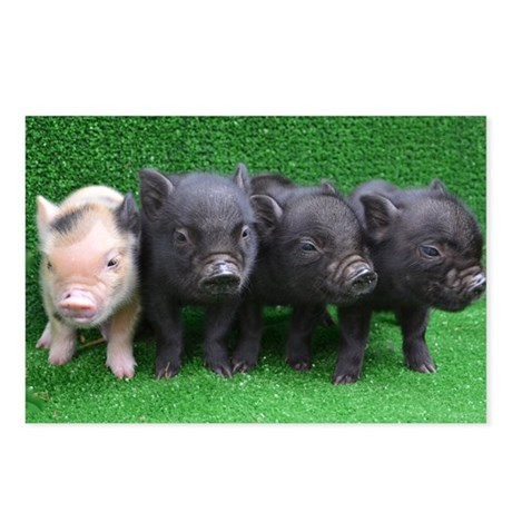 4 micro pigs in a row Postcards (Package of 8)