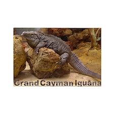 grand cayman iguana Rectangle Magnet