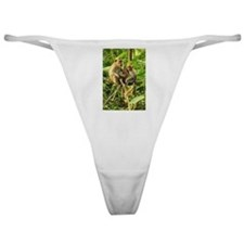 Togetherness on a Branch Classic Thong
