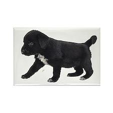 Labrador Retriever Puppy Rectangle Magnet