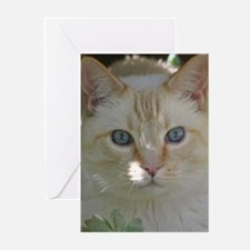 Flame Point Cat Greeting Cards (Pk of 10)