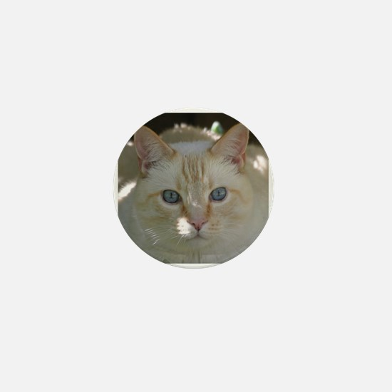 Flame Point Cat Mini Button