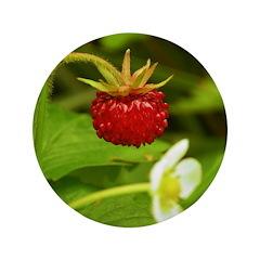 Wild Strawberry 3.5