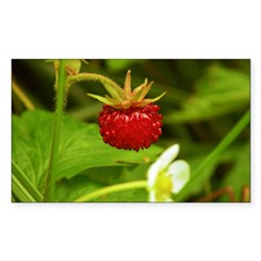 Wild Strawberry Decal