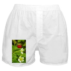 Wild Strawberry Boxer Shorts