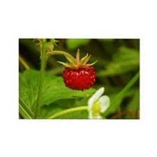 Wild Strawberry Rectangle Magnet