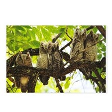 owls Postcards (Package of 8)