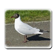 Black-headed Gull 8R31D-10 Mousepad