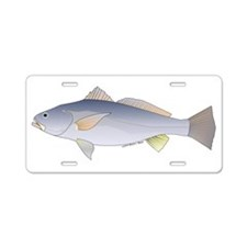 Totoaba (aka Tortuava) fish Aluminum License Plate