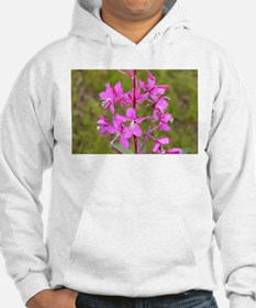 Alaskan fireweed flower in bloom Hoodie