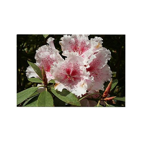 Rhododendron flower in bloom Rectangle Magnet