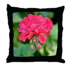 Geranium flower (red) in bloom Throw Pillow