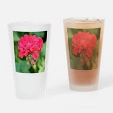 Geranium flower (red) in bloom Drinking Glass