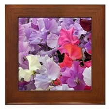 Sweet peas flowers in bloom Framed Tile