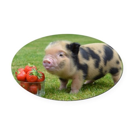 micro pigs strawberry