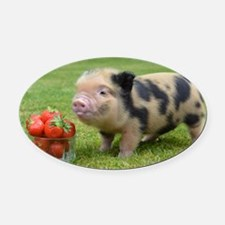Micro pig with strawberries Oval Car Magnet