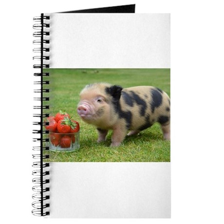 Pint Size Pigs a UK breeder of Micro Pigs for sale