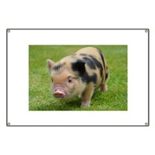 Little Spotty micro pig Banner