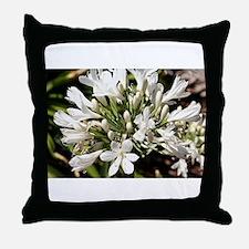 Agapanthus (white) flower in bloom Throw Pillow