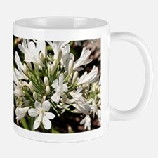Agapanthus (white) flower in bloom Mug
