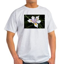 African iris (dietes) flower in bloom T-Shirt