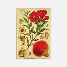 Vintage Pomegranate Rectangle Magnet