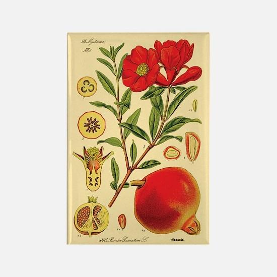 Vintage Pomegranate Rectangle Magnet