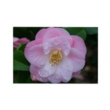 Camellia flower in bloom Rectangle Magnet