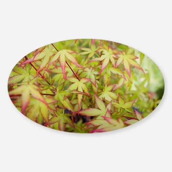 Japanese Maple Sticker (Oval)