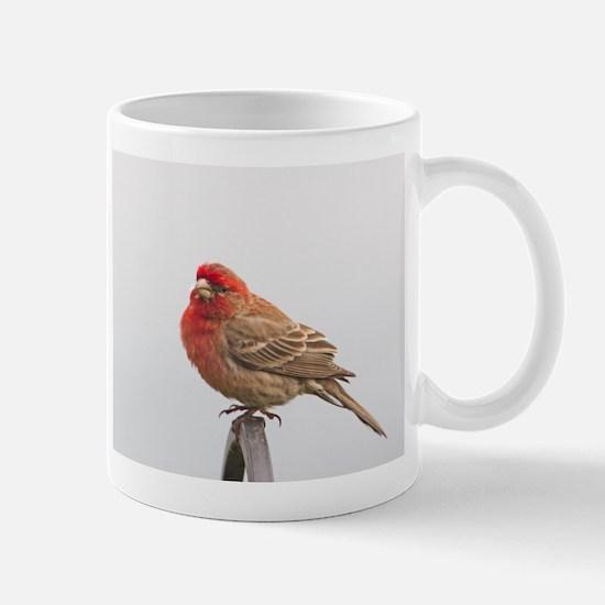 House Finch Mug