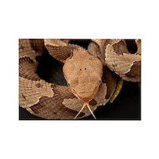 Copperhead Snake Rectangle Magnet