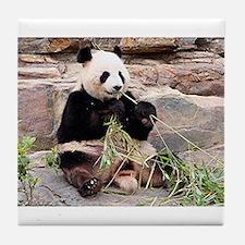 Panda at zoo Tile Coaster