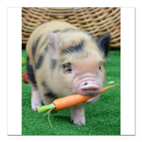 "Micro pig with carrot Square Car Magnet 3"" x 3"""