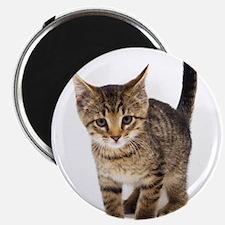 Cute Brown Tabby Kitten Magnet