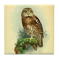 Owl on a branch Tile Coaster