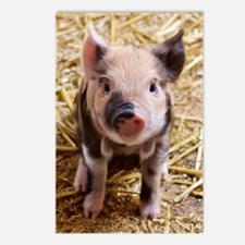 This Little Piggy Postcards (Package of 8)