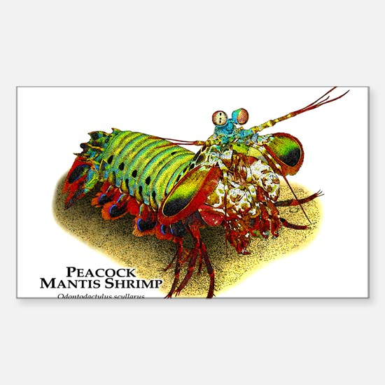 Peacock Mantis Shrimp Sticker (Rectangle)