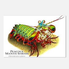 Peacock Mantis Shrimp Postcards (Package of 8)